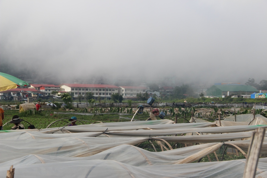 Strawberry Farm at Baguio City