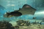 Oceanarium, Manila Ocean Park